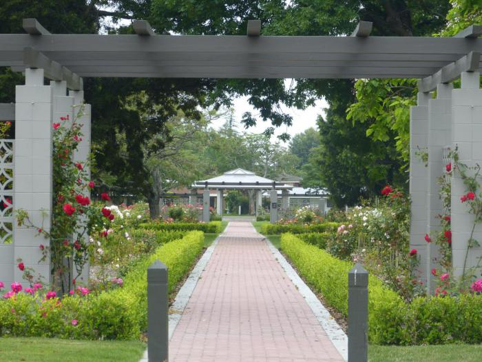 A beautiful rose garden to enjoy