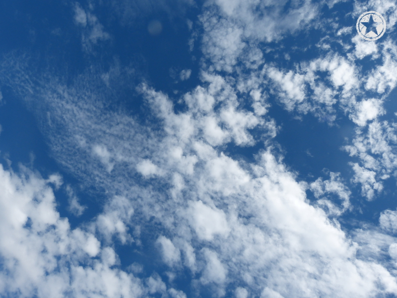 Looking straight up at the gorgeous blue sky