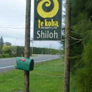 Te Koha Shiloh Orchard