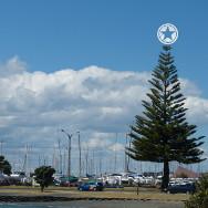 Pine tree against a cloudy blue sky at Pandora Pond, Napier